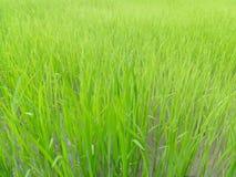 Almofada verde Imagens de Stock