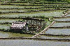 Almofadas de arroz Foto de Stock Royalty Free