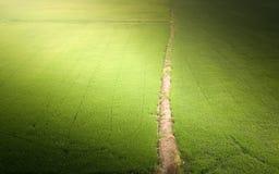 Almofadas de arroz e passagens verdes do campo na luz do sol imagens de stock royalty free
