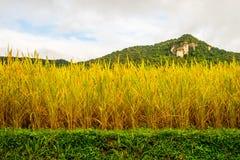 Almofadas de arroz na elevação Fotografia de Stock Royalty Free
