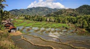 Almofadas de arroz no campo bonito e luxuoso em torno do bajawa Nusa Tenggara, ilha de flores, Indonésia imagens de stock