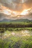 Almofadas de lírio e nuvens douradas Foto de Stock Royalty Free