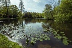 Almofadas de lírio e patos de lago maio Fotos de Stock