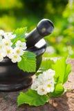 Almofariz com espinho da flor Imagem de Stock Royalty Free