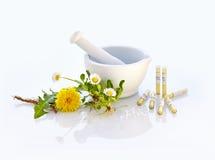 Almofariz Daisy Dandelion Natural Medicine imagens de stock royalty free