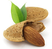 Almond. Dried almond with his leaves stock images