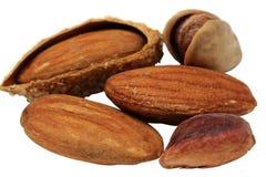 Almond Stock Photography