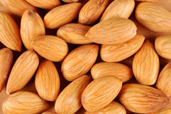 Free Almond Royalty Free Stock Photo - 25392275
