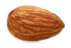 Free Almond Royalty Free Stock Photos - 63913758