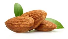 Free Almond Royalty Free Stock Photos - 63913878
