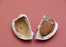 Almond. 