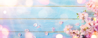 Almond Blossom On Blue Wood royalty free stock image