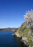 Almond blossom . Lake Ohrid, macedonia Stock Image