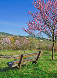 Almond Blossom in the Palatinate Stock Photos