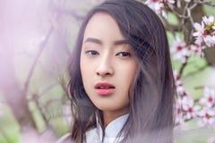 Almond blossoms - Vietnamese girl in White Ao Dai Stock Photography