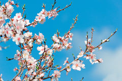 In bloom Stock Photo