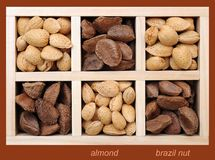 Almond and Brazil nuts Royalty Free Stock Photo