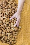 Almond collection from home royalty free stock image