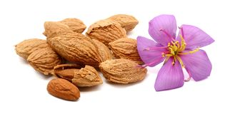 Almond. Composition from Almond nuts on the white  background Stock Photography