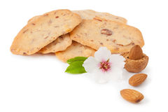 Almond cookies isolated Royalty Free Stock Image