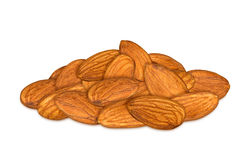 Almond cores Stock Images