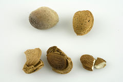 Almond. Crushed almond shell exploded from the natural almond Stock Photo