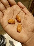 Almonds. Almond are the dry fruits rich in protein and carbohydrates Royalty Free Stock Image