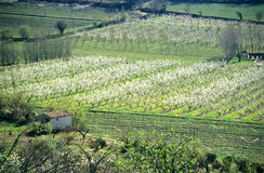 Almond Farm. An almond farm in blossom in spring, Provence, France stock photo