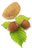 Almond with filbert Royalty Free Stock Photography