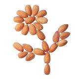 Almond flower Stock Images