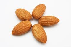 Almond Flower Stock Photography