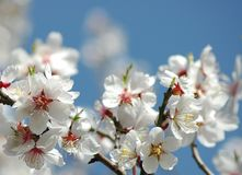 Springtime blossoms royalty free stock images