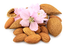 Almond with flowers Stock Images