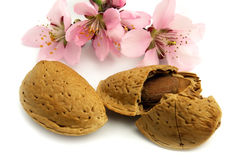 Almond with flowers Stock Photo