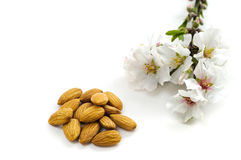 Almond flowers and nuts Royalty Free Stock Image