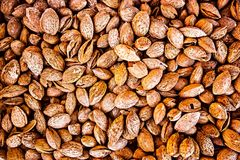 Almond fruits Stock Photography