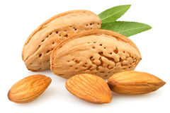 Almond group royalty free stock images