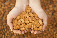 Almond in hands shaping heart royalty free stock photos