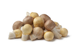 Almond and Horse Mushrooms Royalty Free Stock Images