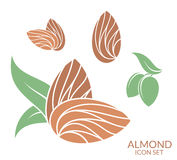 Almond. Icon set.  fruit on white background Royalty Free Stock Image