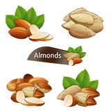 Almond kernel with green leaves set. Isolated on white background vector illustration. Organic food ingredient, traditional vegetarian snack. Almond nut seed Stock Image