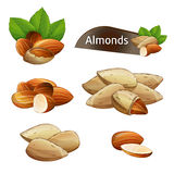 Almond kernel with green leaves set. Isolated on white background vector illustration. Organic food ingredient, traditional vegetarian snack. Almond nut seed Stock Photography