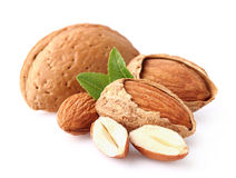 Almond kernel. On a white background stock photography