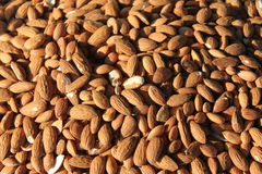Almond kernels Stock Images