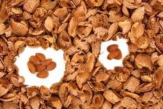 Almond kernels among  hulls Royalty Free Stock Photos