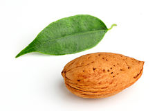 Almond and leaf. Royalty Free Stock Photo