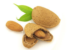 Almond with leaves Royalty Free Stock Photo