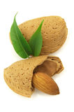 Almond with leaves Stock Photo