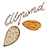 Almond. Logo in retro style with a name drawn by hand in retro styles Stock Image