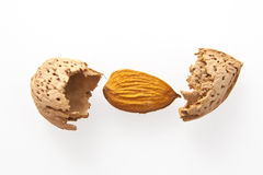 Almond nut Stock Photography